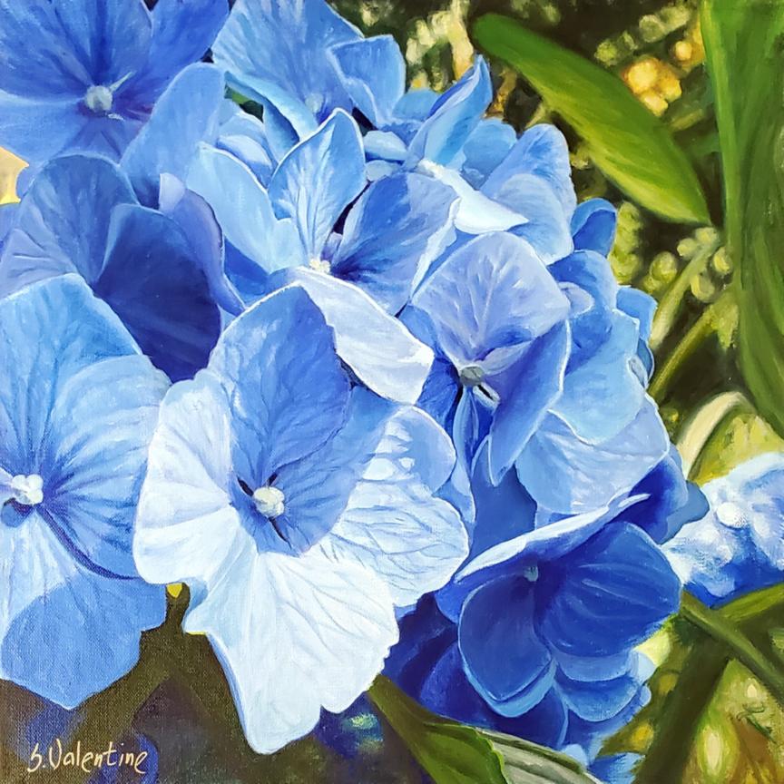 Mom's Hydrangea, 12×12″ OiloL $1200